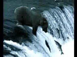 Видео от Nokian (Шины). В шкуре медведя