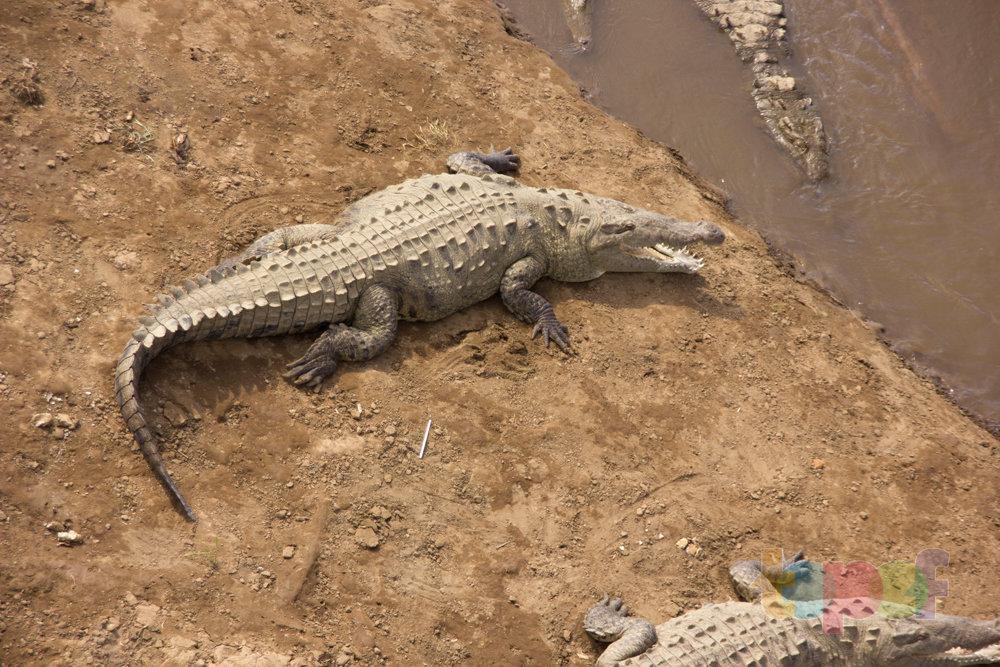 Тест драйв шин Кордиант All Terrain в Коста-Рике. Много крокодилов