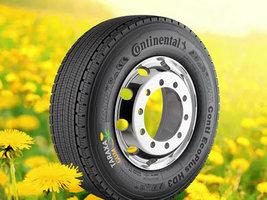 Continental применяет каучук из одуванчиков в комплектующих для коммерческих авт